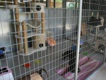 NS box gatti rif 026