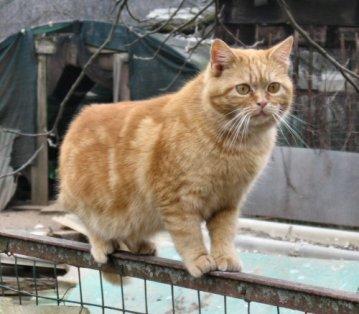 NS-gatto a spasso_8982