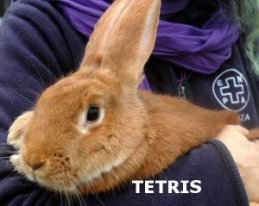 NS_Tetris