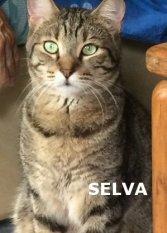 SELVA_NS