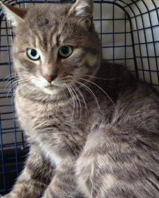 gatto-frattura tibia-NS_0006