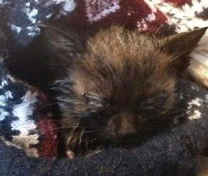 gattino sonno-NS-0043