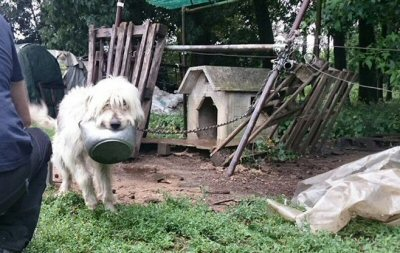 cane ciotola cuccia_0733-NS