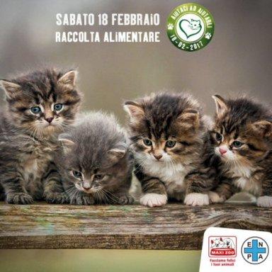 500-raccolta_alimentare_Enpa_Maxi-Zoo_2017-gatti