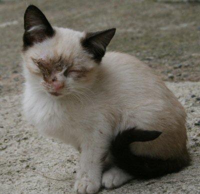 gattino triuggio-NS-2013-10-19 007