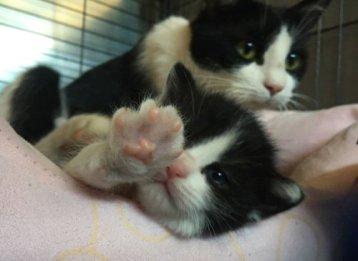 mamma e gattino tombino-NS- 0016