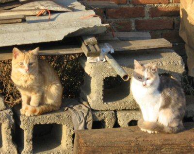 gatti colonia sole_NS-4344