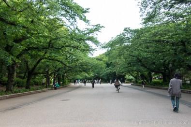 Japon-Tokyo-II-25