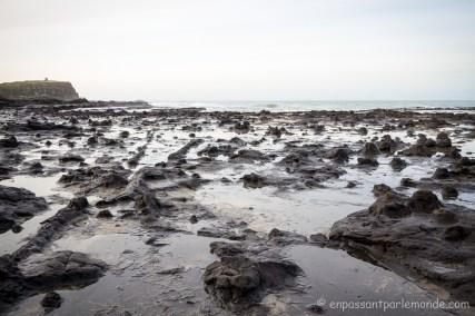 Catlins - Curio Bay