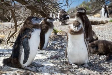 Argentine - Puerto Madryn-16
