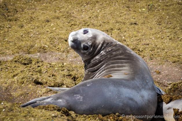Argentine - Puerto Madryn-41
