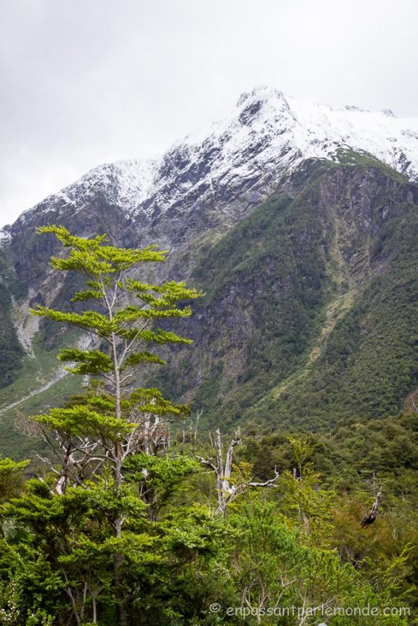 Chili - P.N. Queulat-11