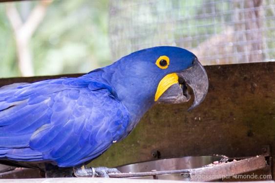 Brésil - Parque das Aves-18