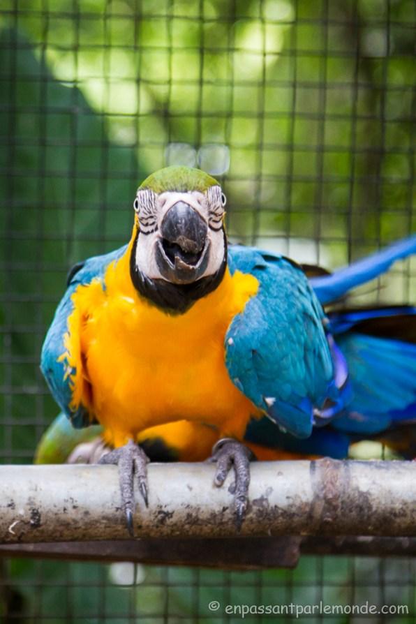 Brésil - Parque das Aves-22