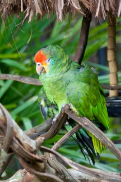 Brésil - Parque das Aves-3