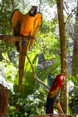 Brésil - Parque das Aves-34
