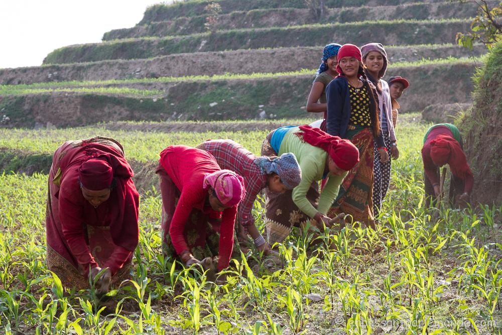 Nepal-Nalma-village-48