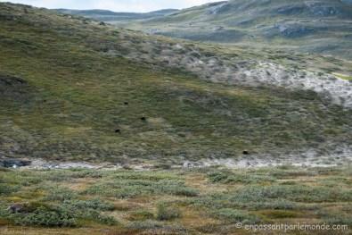 Groenland-ACT-partie-1-48