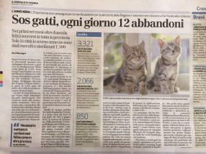 Gattini, numeri insostenibili