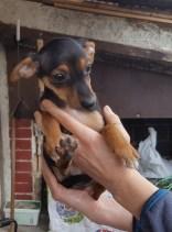 Ciccioli nati il 9 Gennaio (1)