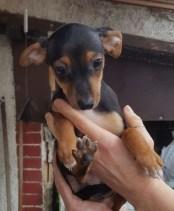 Ciccioli nati il 9 Gennaio (7)