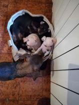 Cuccioli nati il 9 Gennaio (1)