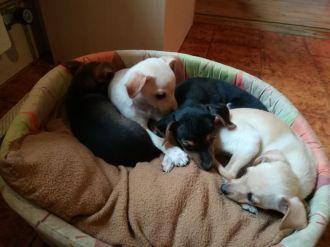 Cuccioli nati il 9 Gennaio (2)
