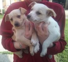 cuccioli di 3 mesi (2)