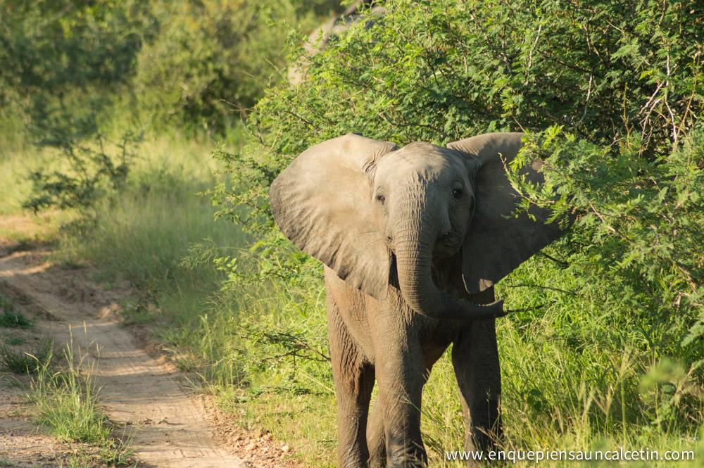 Bebé elefante en Kruger