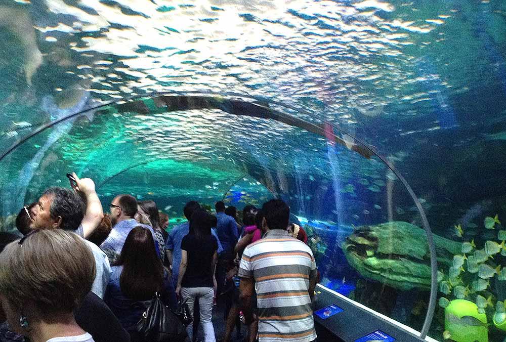 ripleys acuario toronto