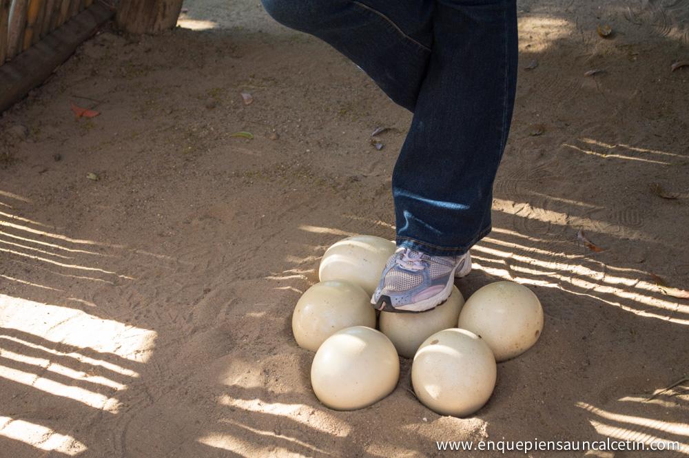 huevo avestruz resistencia