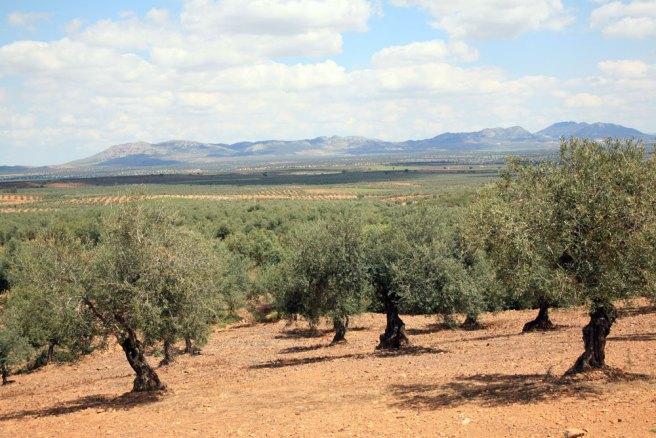 Club de Producto Ruta del Aceite de Extremadura