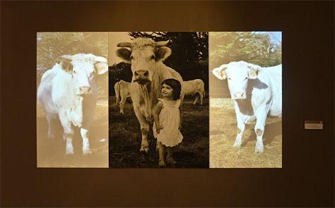 Agnès Varda, Alice et les vaches, 2011 - Musée Paul Valéry