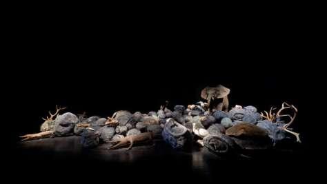 Jean-Luc Parant, Mémoire du merveilleux, 2012 à la galerie Pierre-Alain Challier. Animaux naturalisés, coquillages enchâssés dans des boules en cire à cacheter et filasse, c. 100 m2 -