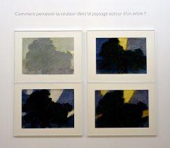 Alexandre Hollan Questions aux arbres d'ici à Lodève - Comment percevoir la couleur dans le paysage autour de l'arbre