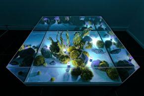 Exposition Athanor, Art Orienté Objet, Paysage macrobiotique, éponge, fluorine, 120 x 12à x 60 cm, 2016