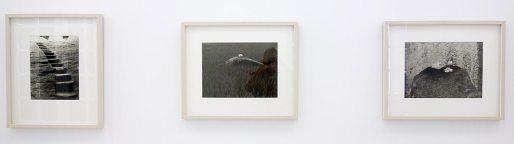 Wolfgang Laib, photographies - La vie secrète des plantes à la Collection Lambert