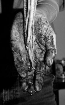 Delleuse Guillaume, Octopus, 2016