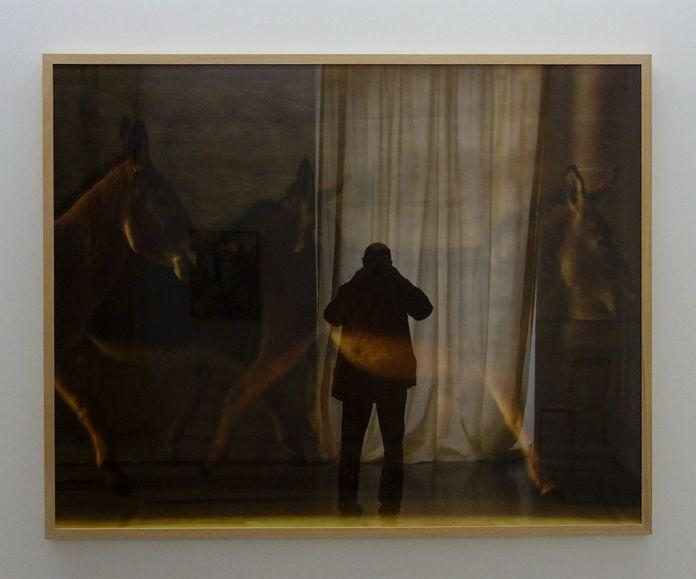 Douglas Gordon, Unnaturalhistorie, 2008 - J'♥ Avignon à la Collection Lambert