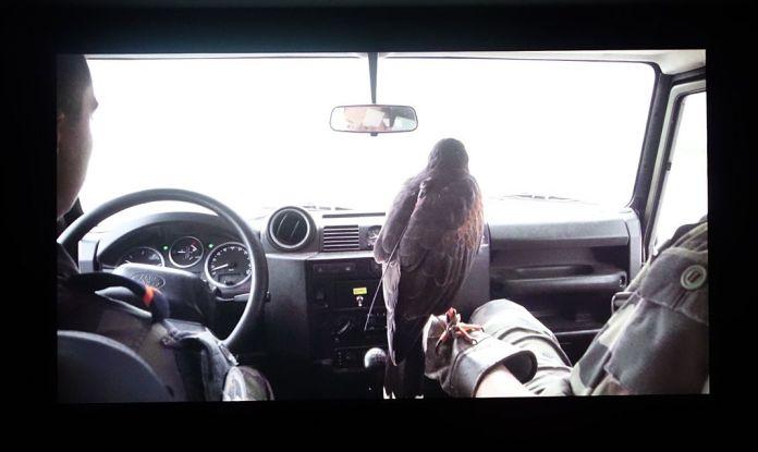Victoire Thierrée – Birds Of Prey – Supervisions - Des tentatives d'envol au regard vertical - Biennale Chroniques - Friche la Belle de Mai