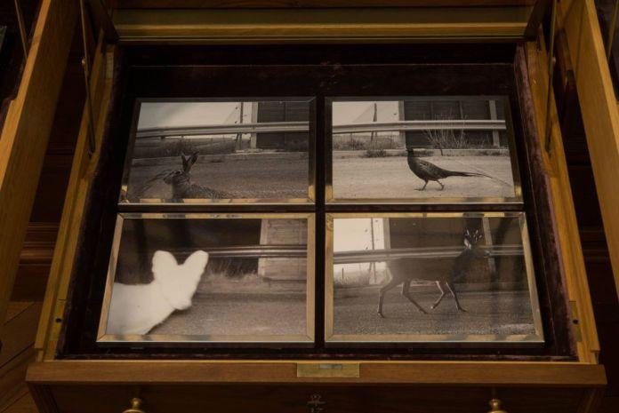 Sophie Calle - «Liberté surveillée» - Musée de la Chasse et de la Nature - Salle d'armes - photo Béatrice Hatala