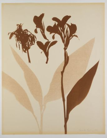 Grand Herbier d'Ombres, 1972, (détail)
