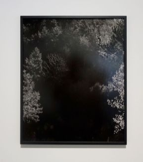 Awoiska van der Molen - #274-5, 2011 - Sur Terre - Image, technologies & monde naturel - Rencontres Arles 2019