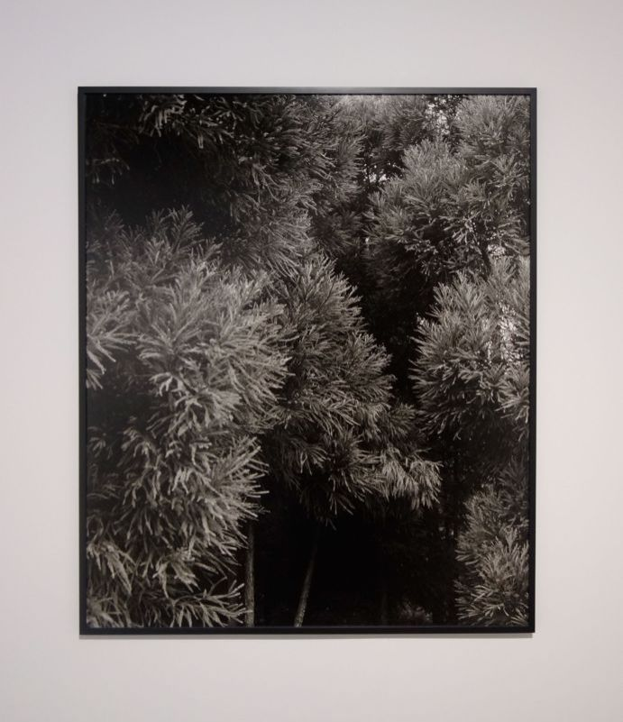 Awoiska van der Molen - #412-9, 2015 - Sur Terre - Image, technologies & monde naturel - Rencontres Arles 2019