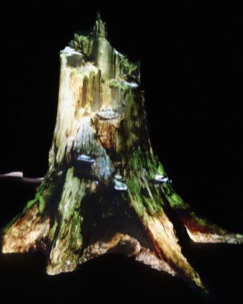 Broersen et Lukàcs - Schwayg Main Hartz, video installation, 2018 - Sur Terre - Image, technologies & monde naturel - Rencontres Arles 2019