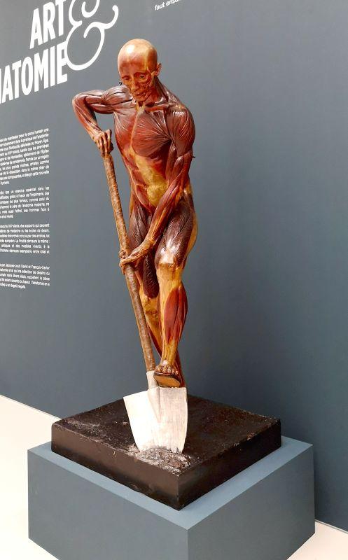 Alphonse Lami, Écorche dit le Bêcheur, 1858 - Art & Anatomie - Musée Fabre