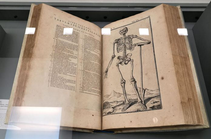 André Vésale, De humani corporis fabrica libri septem, planche d'illustration, 1555 - Art & Anatomie - Musée Fabre