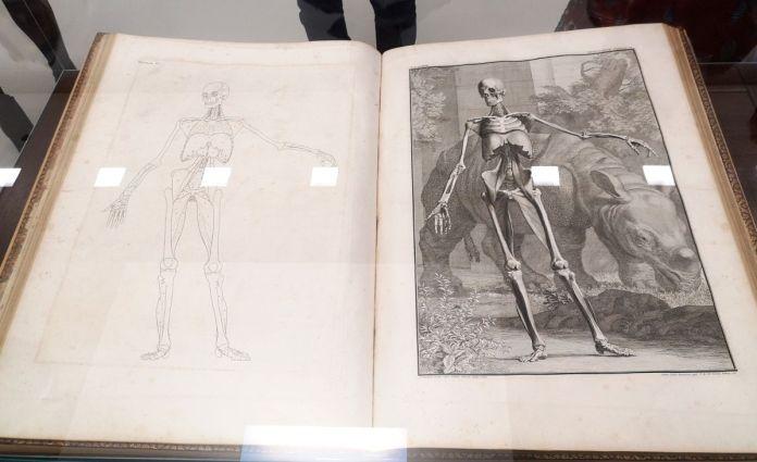 Bernhard Siegfried Albinus - Tabulae sceleti et musculorum corporis humani, 1747 - Art & Anatomie - Musée Fabre