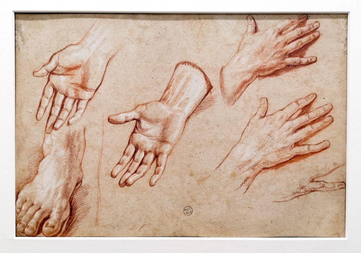 Philippe de Champaigne - Études de mains et de pied, 1ère moitié du 17e siècle - Art & Anatomie - Musée Fabre