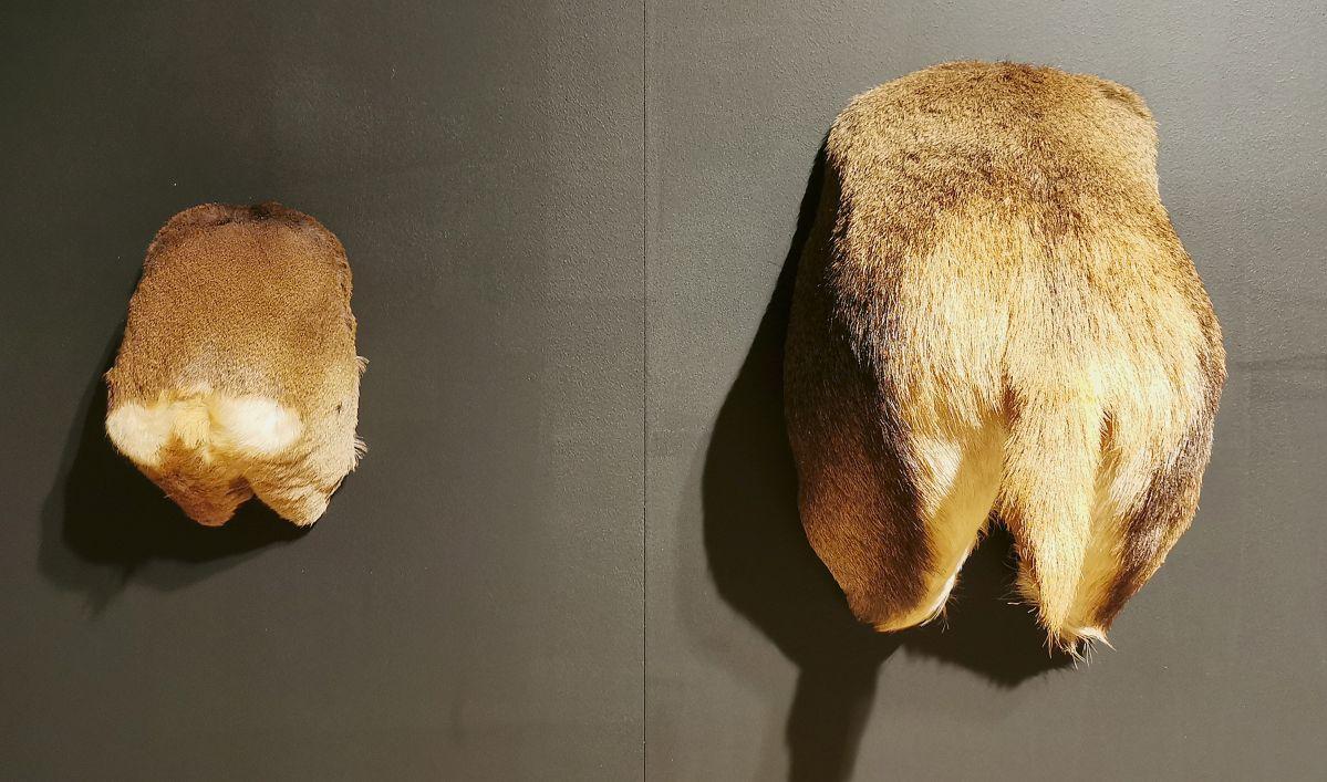Rodolphe Huguet - Sans titre, 2003-2005 - Sauvages- Maison Rouge - Musée des vallées cévenoles à St Jean du Gard